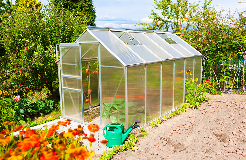 Small greenhouse in garden